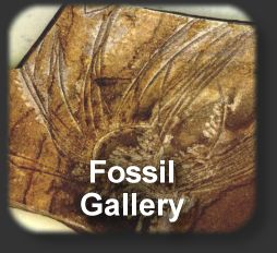 To Beneath the Calamites Tree - a fossil gallery by Prem Subrahmanyam